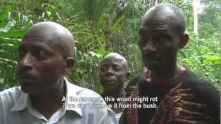 A Forest for the Trees (Cameroon)