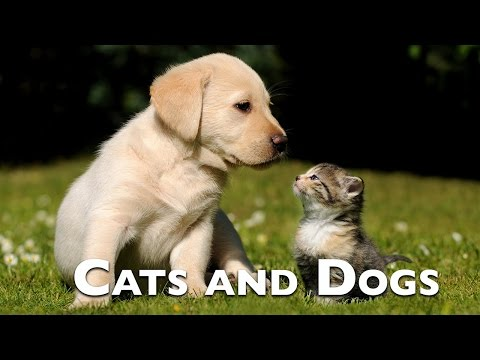 The best vine compilation cats and dogs 2016