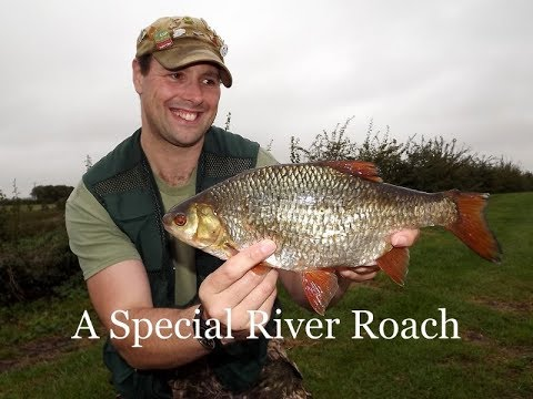 A Special Fish From The River