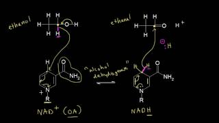 Biological Redox Reactions