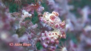 どこにいるのかわかるかな?サンゴの中にいるかわいい海の生き物を探せ!