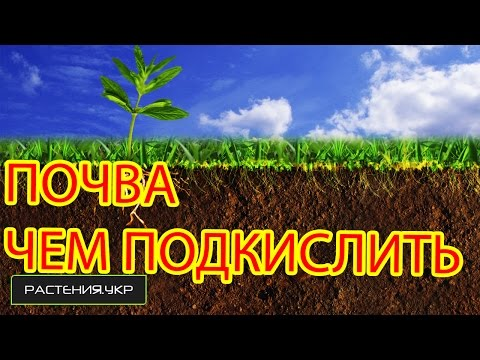 Кислотность почвы / Как подкислить почву?