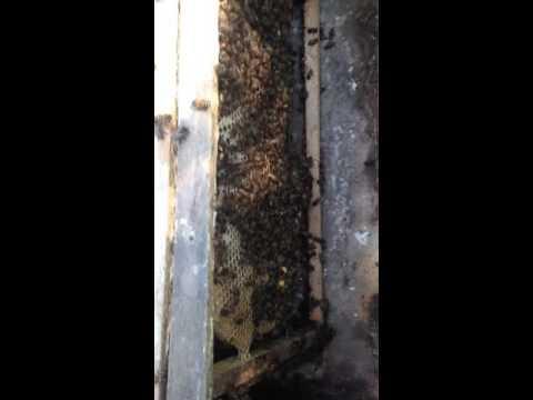 Khu nuôi ong lấy mật tự nhiên