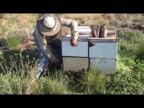 experimento colmena 3 camaras de cria de YouTube · Duración:  48 segundos  · 584 visualizaciones · cargado el 23.07.2013 · cargado por ba sauk