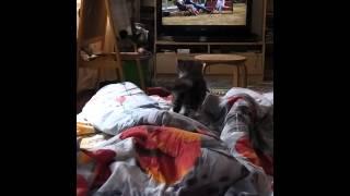 Кошка воспитывает непослушного котенка на 😁