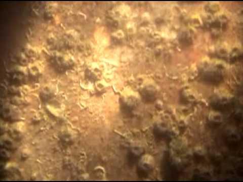 MV  Ocean Star   Under water survey   Part 4