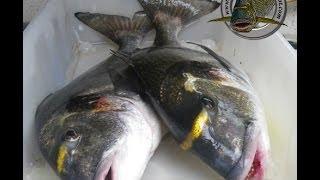 pescadoradatanero TRES DORADAS pesca ,fishing , peche..wmv