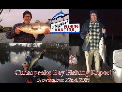 Chesapeake Bay Fishing Report: November 22nd 2019
