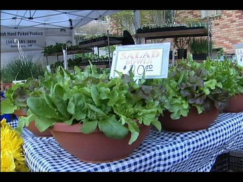 Container Gardening: Growing Salad Bowls   YouTube