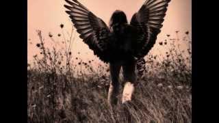 JONNY MALDONADO ~ LET IT RAIN ROSES