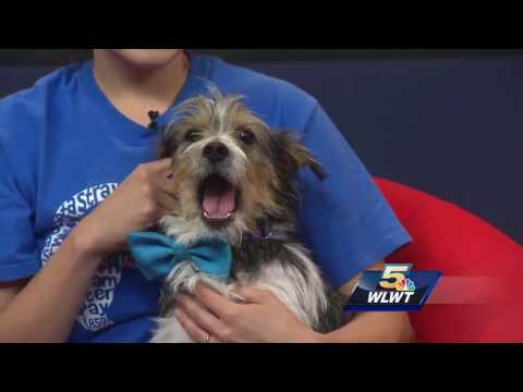 Meet some of SAAP's pets ready to be adopted