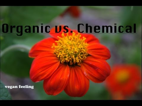 INTERVIEW WITH KITZIA #1: Organic vs. Chemical Farming