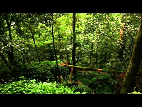 Portuguese Forest - The Sounds of Nature