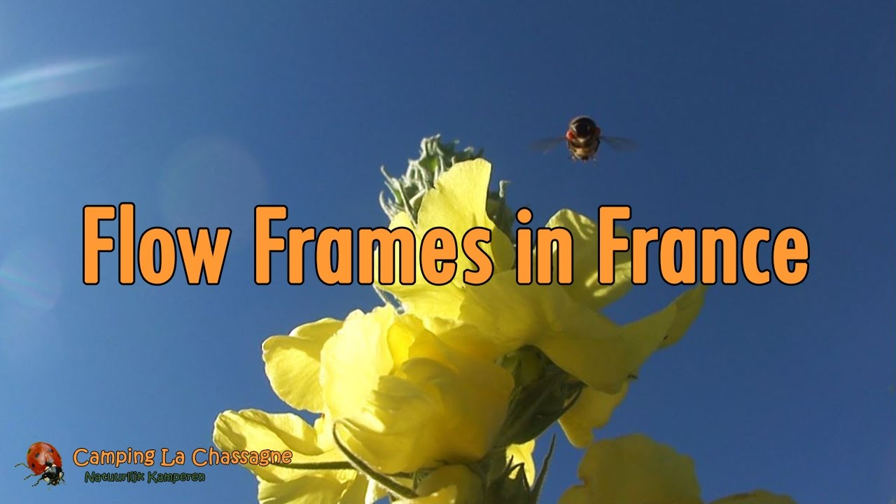 flow hive explained harvesting flow frames in france 6 youtube. Black Bedroom Furniture Sets. Home Design Ideas