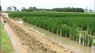 LOUISIANA FARM BUREAU: INTERVIEW WITH A RICE FARMER