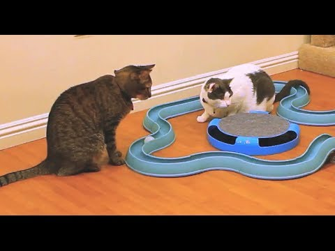 Mean Kitty VS Mousebot