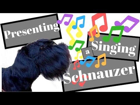 Giant Schnauzer Singing - BlackDogProduction