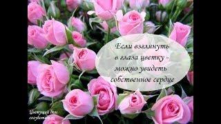 Афоризмы  про цветы