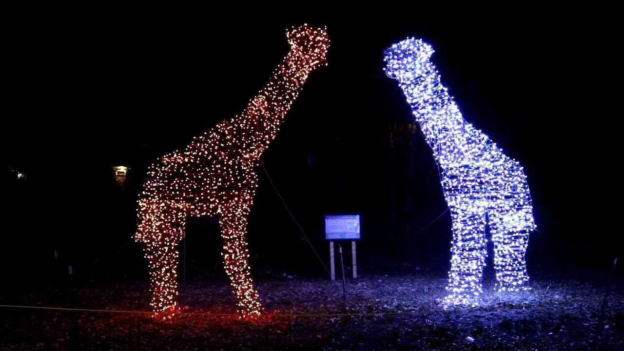 Folsom Zoo Christmas Lights