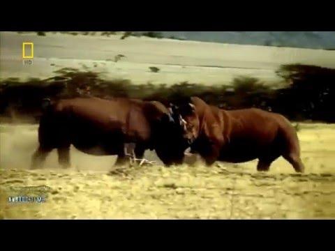 Sự trả thù của bầy voi Nam Phi - Thiên nhiên hoang dã full HD Thyết minh