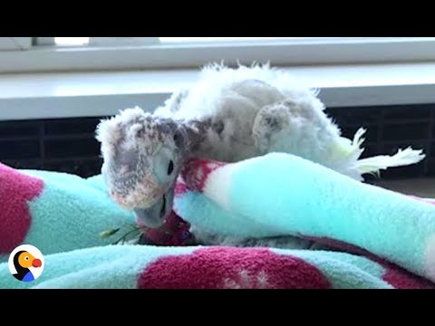 Rescued Parrot Says Goodbye To Bird Best Friend With Cancer | The Dodo