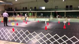 Novice Rally Obedience (a Class) - Beren & Ransom - Dog Obedience Training In Miami, Fl