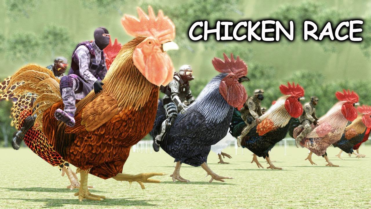 The Great Chicken Race Youtube