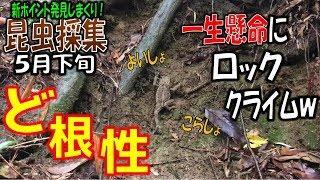 【クワガタ採集&カブトムシ採集】昆虫採集2018 ロッククライムをするヒ...