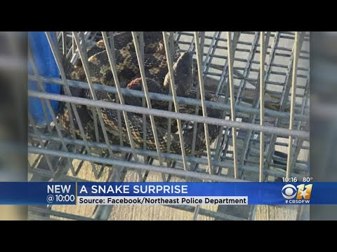 Snake Found In Shopping Cart At North Texas Walmart