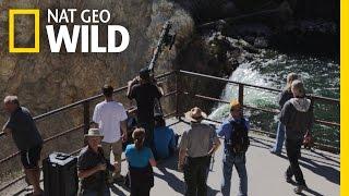Behind the Scenes: Filming Yellowstone Falls   Wild Yellowstone