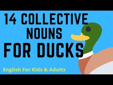 14 Collective Nouns For Ducks