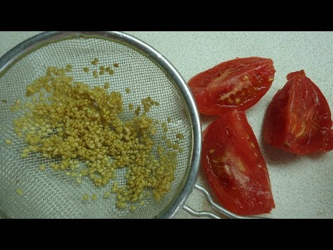 Как отделить семечки от помидор