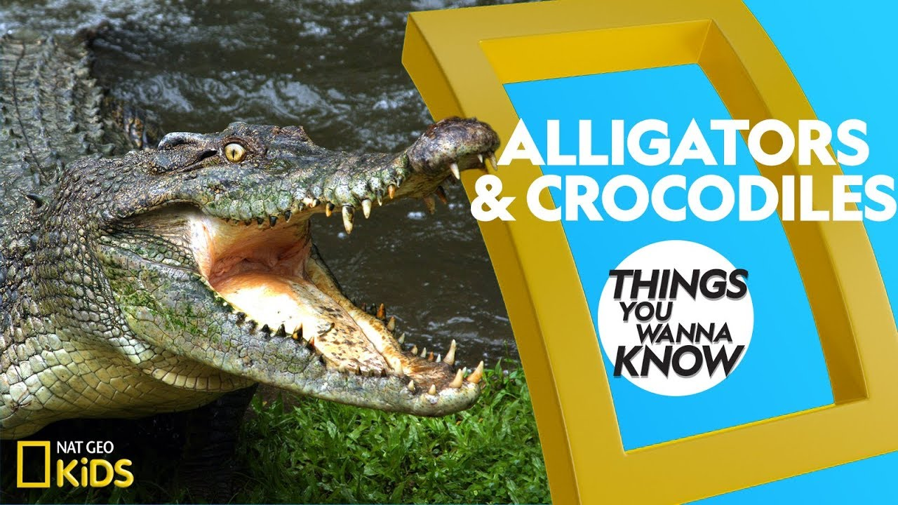 Cool Facts About Alligators and Crocodiles | THINGS YOU WANNA KNOW