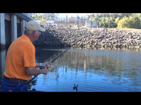 Striper Fishing In Tennessee