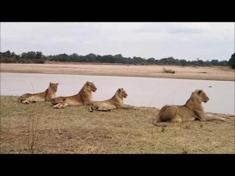 African safari 2016