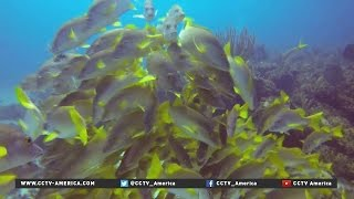 US and Cuba working together to protect marine life