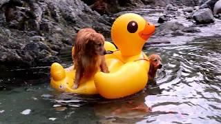 2017年09月10日(日) 川遊びに行って来ました。 水難救助犬も...