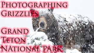 Photographing Grizzlies in Grand Teton National park! Canon 80d Tamron 150-600 G2