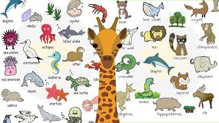 Animal Names: Types of Animals in English with Useful List and Animal Pictures