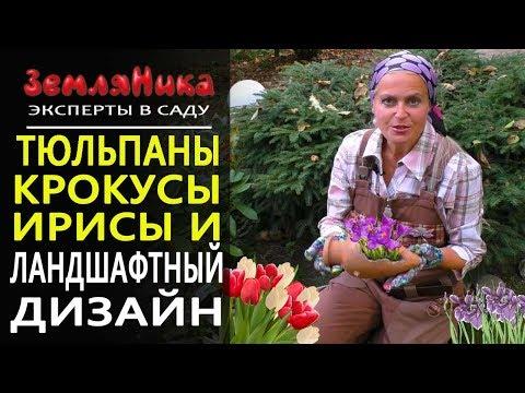 Вопрос: Когда посадить тюльпаны в клумбы в средней полосе России?