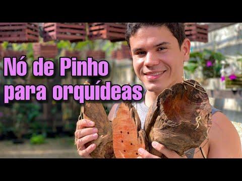 ECO PINHOS -