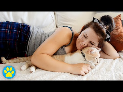Best Instruction How To Hug A Cat