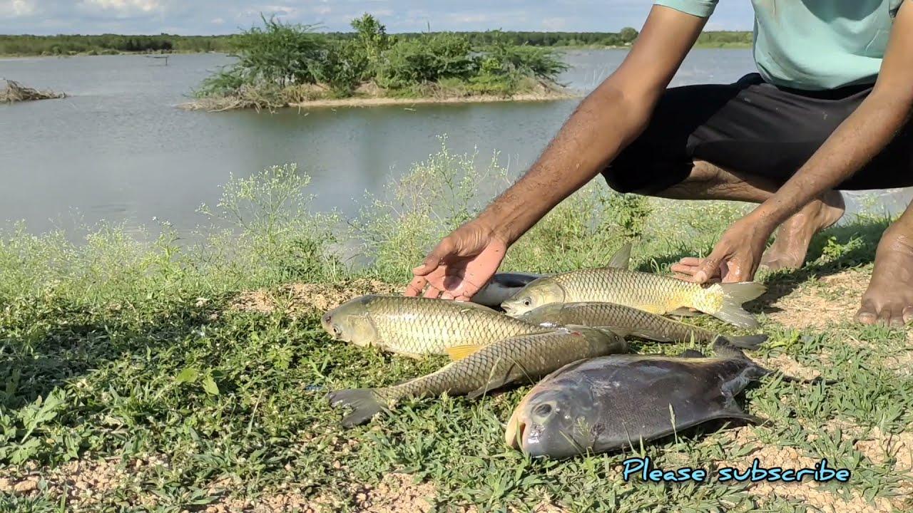 very big Redbilled fish catching|| hook fishing | grasscrap fihes