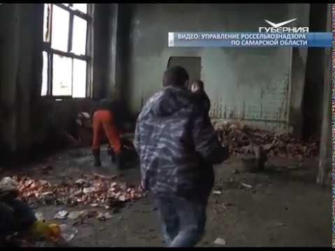 Партию контрафактных грибов обнаружили в Самарской области