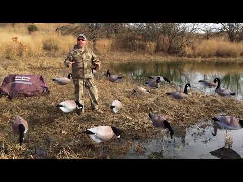 Motion Goose Decoys Improve Goose Hunting Success. Goose Video