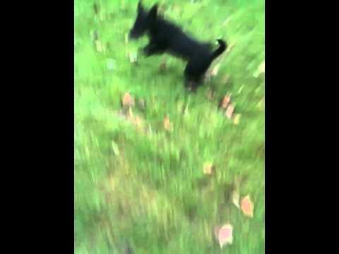 Dog in Maids Moreton