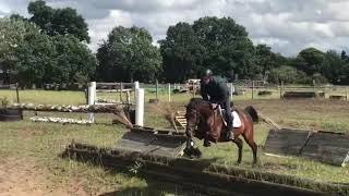 4 year old TB potential eventer