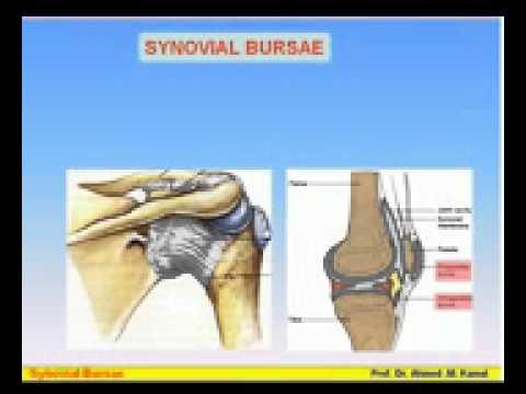 09 Serous Membranes 2 Synovial Sheaths & Bursa Azhar Medicine com