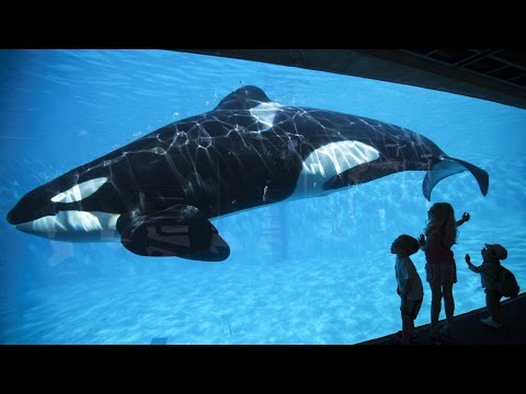 "GOOD: SeaWorld Will End Killer Whale Breeding Program, Take ""New Direction"""