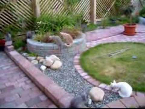 La Perm and Selkirk Rex in Catsafe Garden